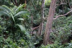 Gröna växter och träd i den Bali djungeln Indonesien Arkivbild