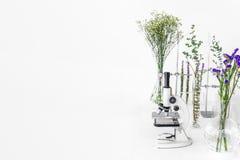 Gröna växter och vetenskaplig utrustning i laborotary biologi Mikroskop med provrör/exponeringsglas behållare och klämma och gräs arkivfoto