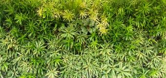 Gröna växter på väggen Royaltyfri Bild
