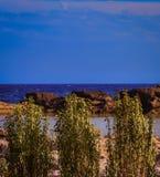 Gröna växter runt om en liten sjö från stannat vatten nära stranden i Rhodes arkivbilder