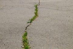 Gröna växter som växer i sprucken textur för asfaltväg Royaltyfri Fotografi