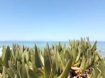 Gröna växter vid havet Royaltyfri Foto