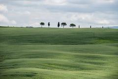 Gröna vetefält i kullarna av Tuscany royaltyfri fotografi