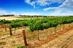 gröna vines Royaltyfri Foto