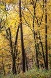 gröna wood solljusbakgrunder för natur Arkivfoto