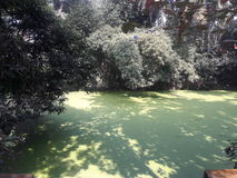 Grönaktig natur Royaltyfria Bilder