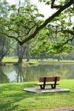 Grönaktig plats Royaltyfria Foton