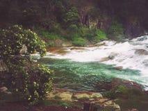 Grönaktigt Arkivfoto