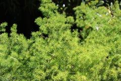 Grönaktigt grönaktigt Arkivbild