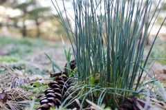grönare gräs royaltyfri foto