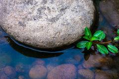 grönast Arkivfoton