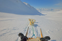 Grönlandhundkapplöpning Arkivfoton