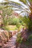 Grönområde i oas av Marocko royaltyfria bilder