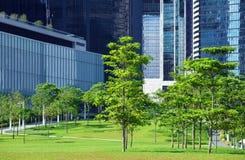 Grönområde och träd i CBD Royaltyfri Fotografi