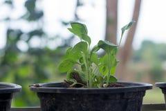 Grönsak på trädkrukan royaltyfria bilder