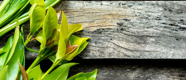 Grönsak på wood bakgrund Royaltyfri Bild