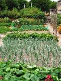grönsak patch2 Royaltyfria Foton