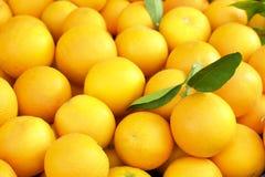 Grönsaken för frukt för vårsommardetoxen bantar Slut upp av skördhögen Supermarketställning av den rena och skinande grönsak-/fru arkivfoton