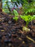 Grönsaken kärnar ur Royaltyfri Fotografi
