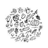 Grönsaken skissar ramen för din design Arkivfoto