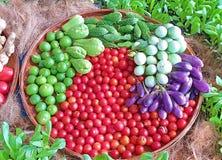 Grönsaker är nya och rena från kemikalieer royaltyfri bild