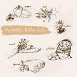 Grönsaker ört och rotar Arkivfoto