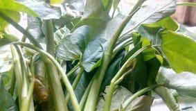 Grönsaker Royaltyfri Fotografi