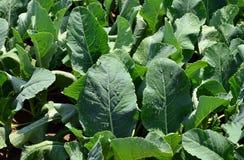 Grönsaker 30 Arkivfoto
