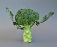 Grönsaker 40 Arkivbild