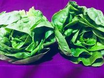 Grönsaker för grönsallatgrönsallathjärta Arkivbild