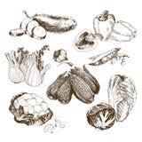 grönsaker för samlingsdesignelement Arkivbilder