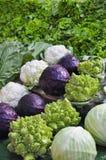 grönsaker för stand för fallbondemarknad Royaltyfri Fotografi