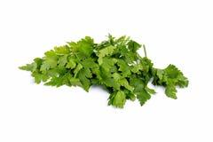 grönsaker för tät fokus för bakgrund vita nya selektiva övre Royaltyfri Foto