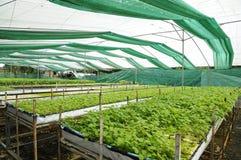 Grönsaker i dolt förtjäna Royaltyfri Fotografi
