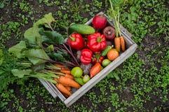 Grönsaker i en ask Fotografering för Bildbyråer