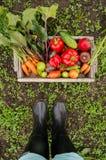 Grönsaker i en ask Royaltyfria Bilder