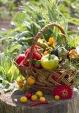 Grönsaker i en vide- korg Arkivfoto