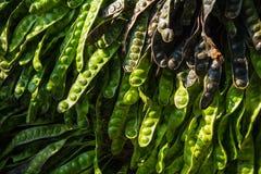 Grönsaker i söderna av Thailand Arkivbild