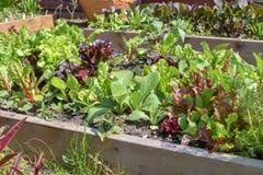 Grönsaker och örter i kökträdgård Royaltyfria Bilder