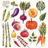 Grönsaker och frukt Arkivbild