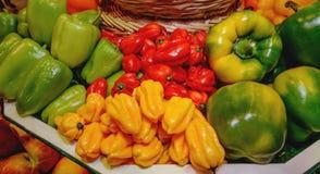 Grönsaker paprika, spanska peppar av olika variationer Guling gräsplan som är röd Begrepp av sunt äta Arkivbild