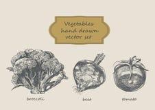 Grönsaker räcker den utdragna uppsättningen Broccoli beta, tomat Arkivfoton