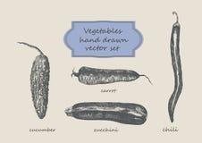 Grönsaker räcker den utdragna uppsättningen Gurka morot, zucchini, chili Royaltyfri Bild
