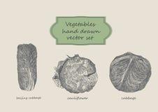Grönsaker räcker den utdragna uppsättningen Pekingkål, califlower, Arkivfoton