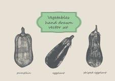 Grönsaker räcker den utdragna uppsättningen Pumpa äggväxt, randig äggväxt Arkivbilder