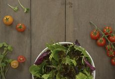 Grönsaker sänker lekmanna- royaltyfria bilder