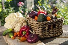 Grönsaker skördar i korg Royaltyfri Bild