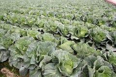 Grönsakerna är sunda och non-giftet Royaltyfri Bild