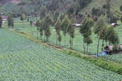 Grönsakfält Arkivbilder