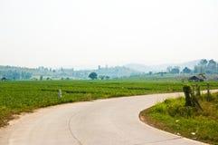 Grönsakfält med banavägen Fotografering för Bildbyråer